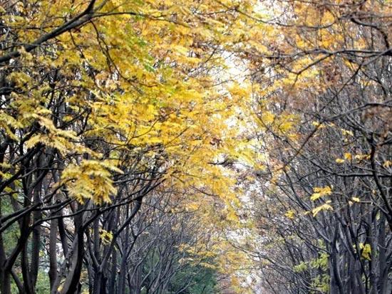 美醉了——湖南文理学院的秋韵冬景