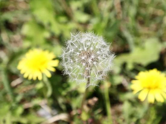 常德丹洲大草原美如画