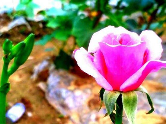 遇见初夏的花